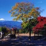 高尾山登山コースの所要時間、距離は?駐車場裏ワザ、アクセスやおすすめコースも!【山登り】